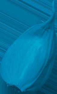 blue garlic